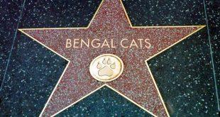 Bengal Cats Celebrities