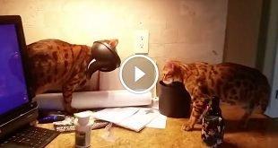 Cat Gets Head Stuck in Mini Garbage Lid