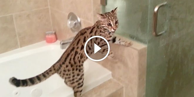 F1 Bengal demands access to shower