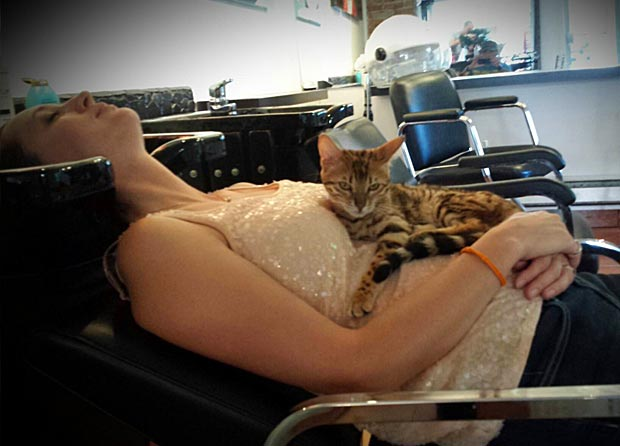 Bengal Cat with customer at hair salon in Montreal