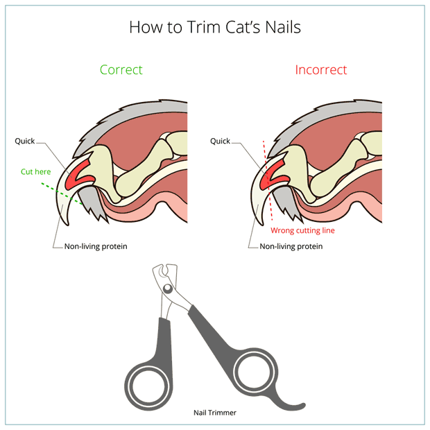 Best Tool To Trim Cat Nails