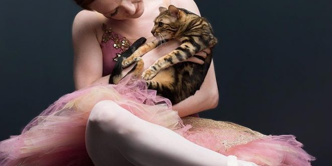 NYC Dance Project Bengal Cat