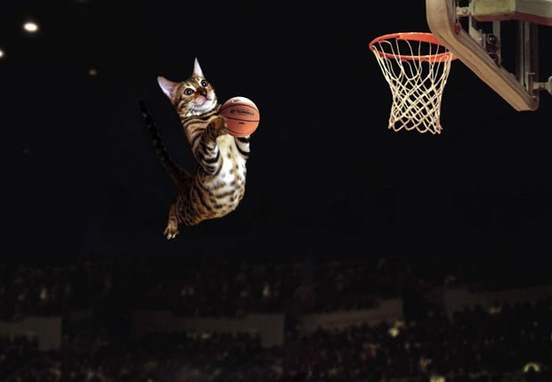 Simba The Bengal Playing Basketball