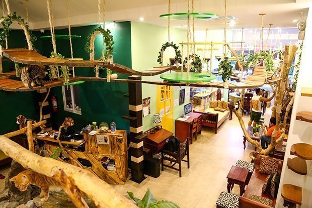 Interior of Bengal Brew Cat Cafe