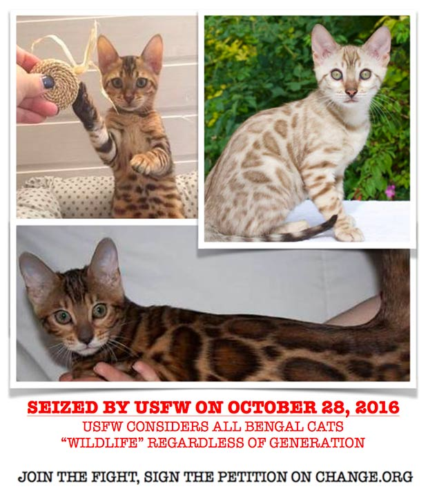 Bengal Cats seized by USFW