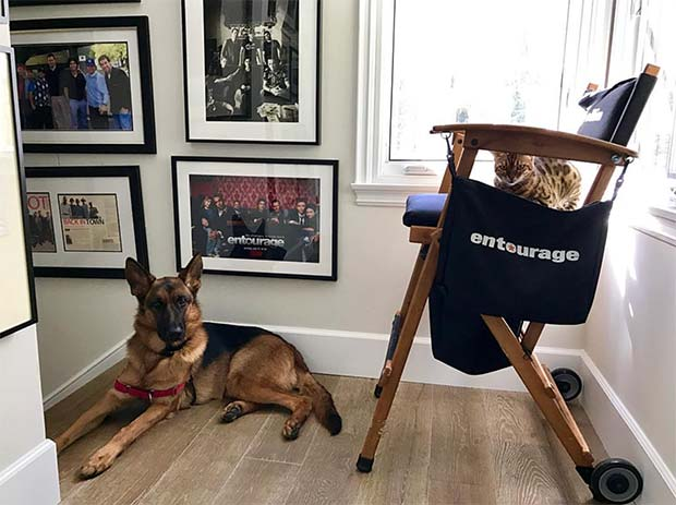 Tex the Bengal on Doug Ellin's movie set chair from Entourage