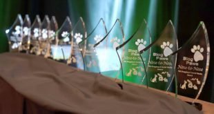 Bengalcats.co Finalist For International Pet Industry Awards