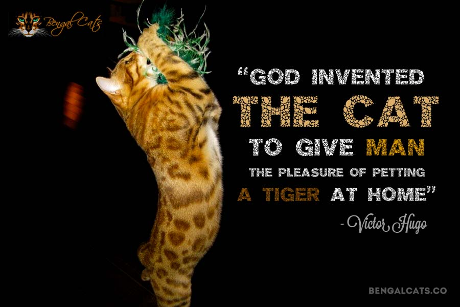 God invented the cat to give man the pleasure of petting a tiger