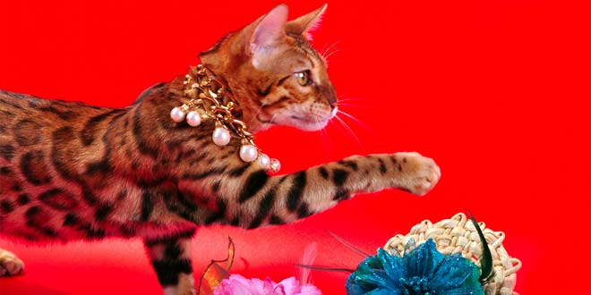 Cat Jewelry that Matches Your Feline Friend