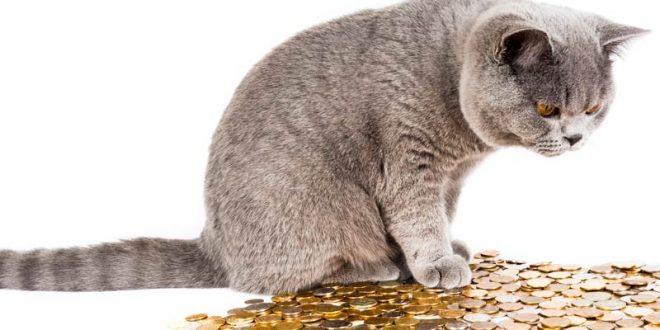 British shorthair cats cost