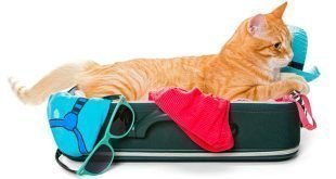 12 Essential Tips For Traveling With Cats
