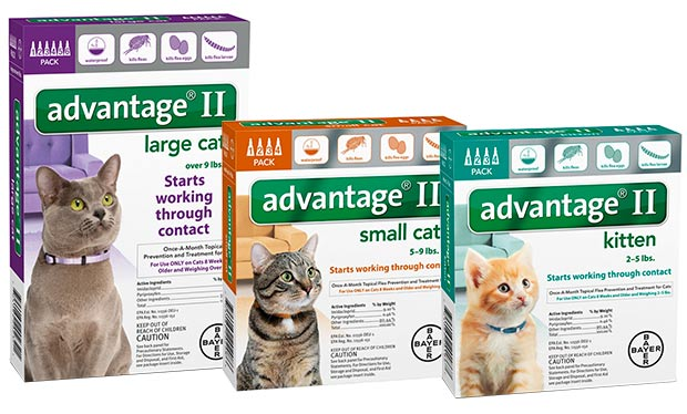 Bayer Advantage 2 for cats