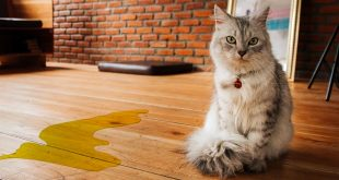 Best Enzyme Cleaner for Cat Urine