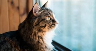 The Best Cat Window Perches for Your Curious Kitty