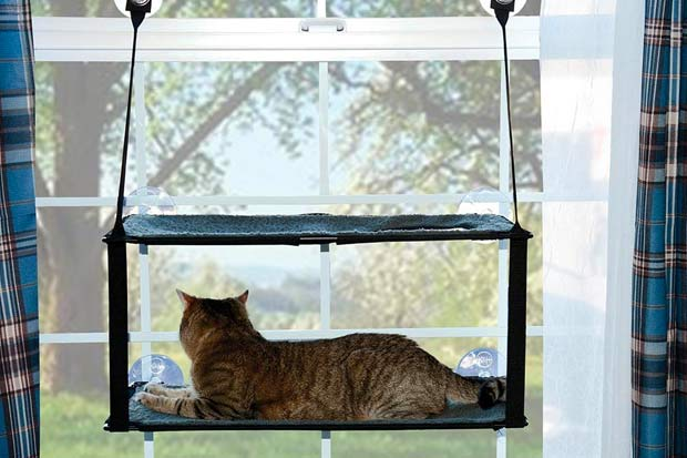 Kitty Sill Ez Window Mount