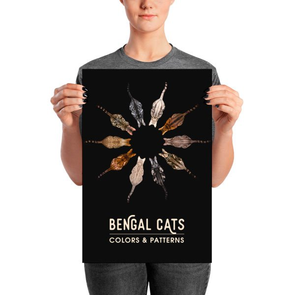 Bengal cats colors and patterns poster 12x18in