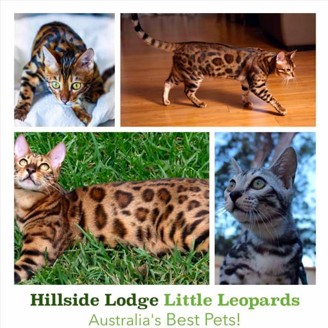 Hillside Lodge Little Leopards