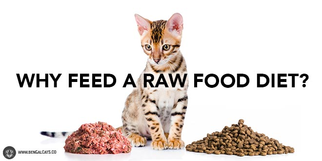 Raw food diet benefits for cats