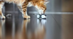 Mousr Review: The First Intelligent Robotic Cat Toy that Moves Like a Real Prey