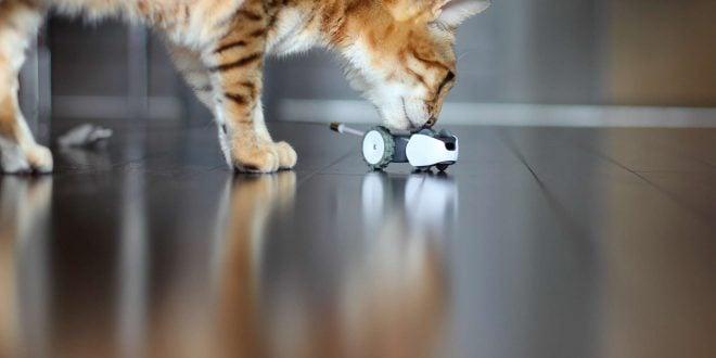Mousr, intelligent robotic cat toy with a Bengal cat
