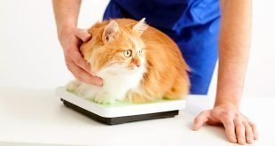 7 Warning Signs of Feline Diabetes in Cats