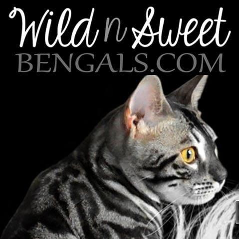 Wild N Sweet Bengals
