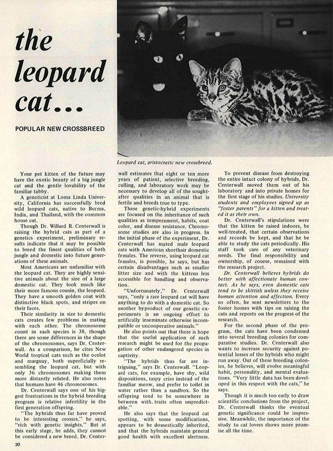 Leopard cat popular new crossbreed article