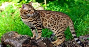 A Spotted Cat or a Striped Dog?